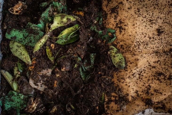 DIY worm farm composting bin in an apartment 3