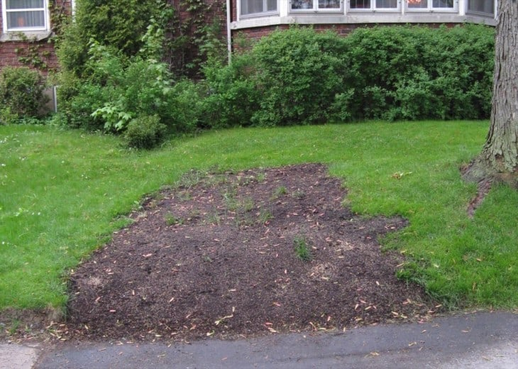 Grass seed in compost