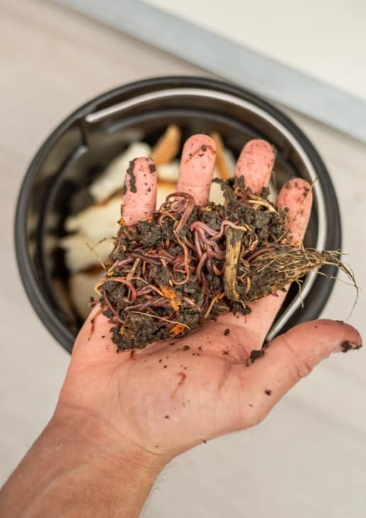 Hand showing composting worms from homemade sustainable waste disposal