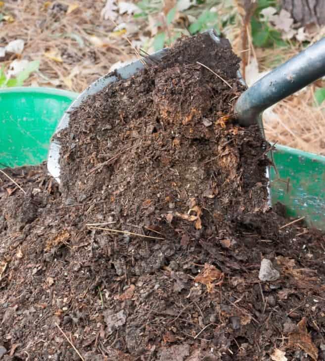 Leaf mold compost in wheelbarrow vertical