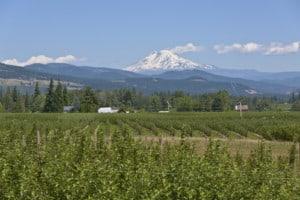 Mt. Adams and Hood River valley Oregon