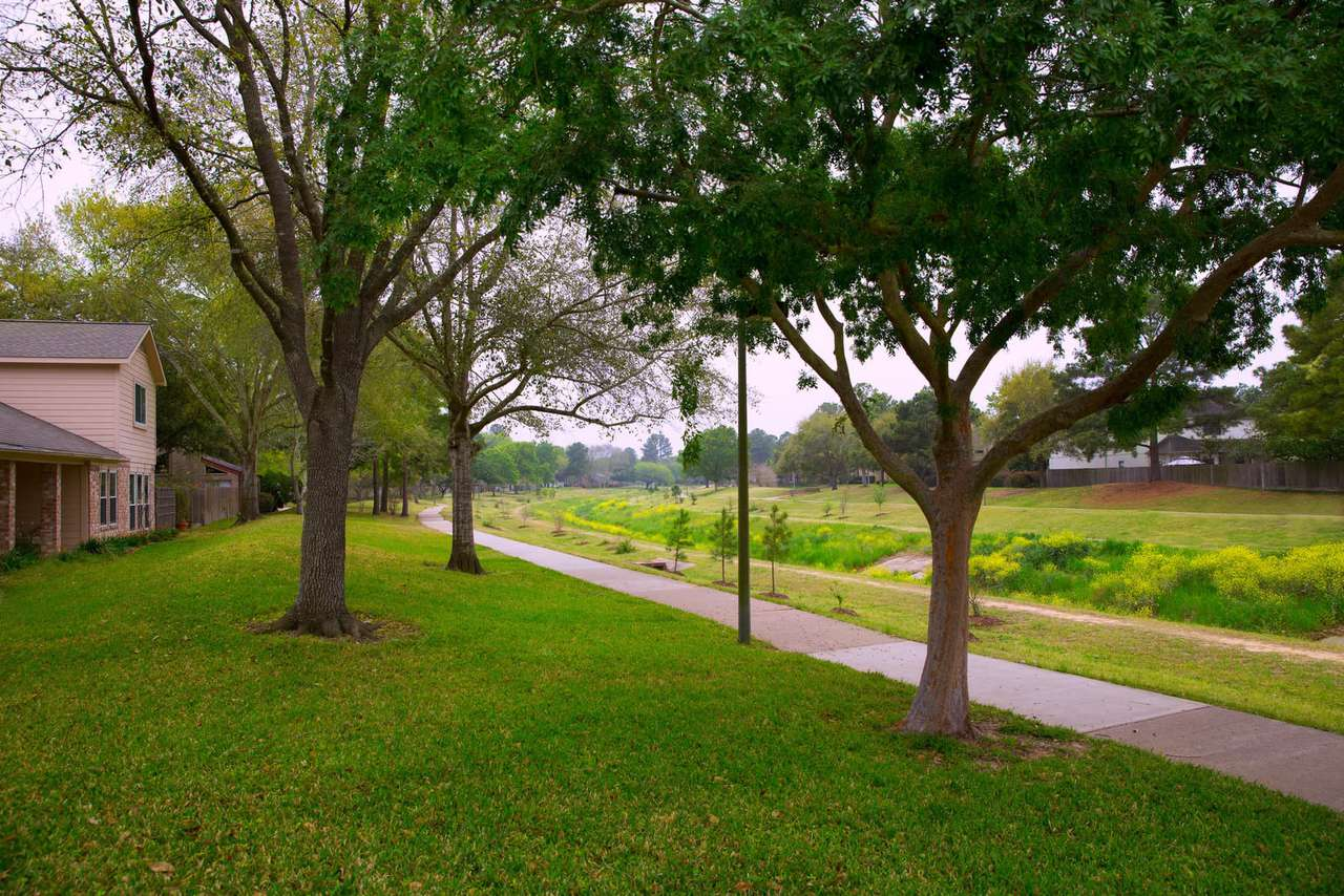 Shade trees on lawn in Texas