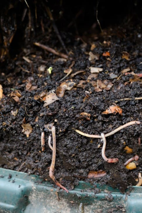 processed homemade compost