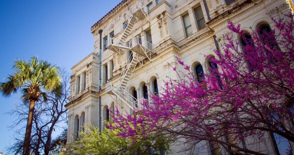 City Hall Spring Blooms in downtown San Antonio Texas