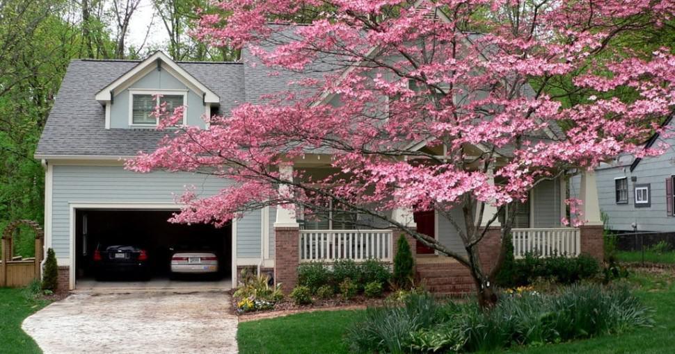 Pink dogwood in Decatur Georgia