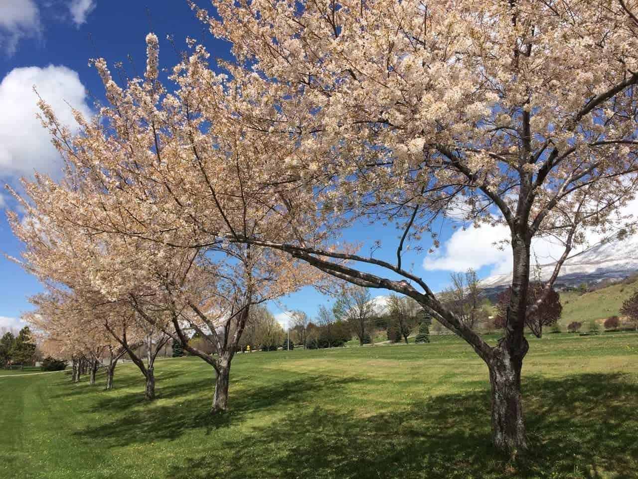 Provo river trail utah spring blooms