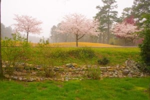 Spring Blooms at Arkansas Golf Course
