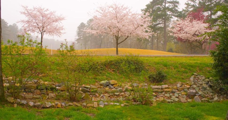Spring Blooms at Arkansas Golf Course
