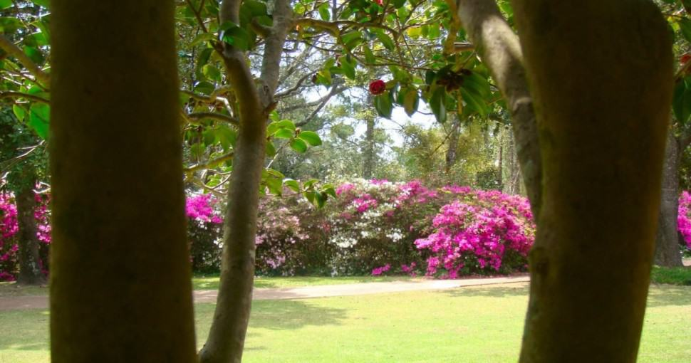 Trees bordering a wonderful view of the Bellingrath gardens Alabama