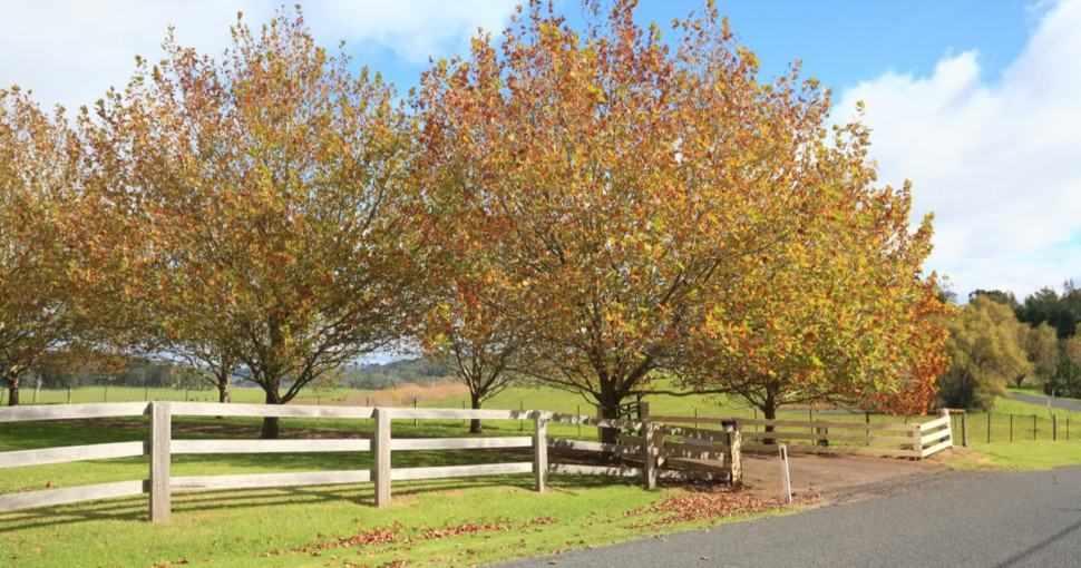 Australian autumn countryside with maple trees changing color