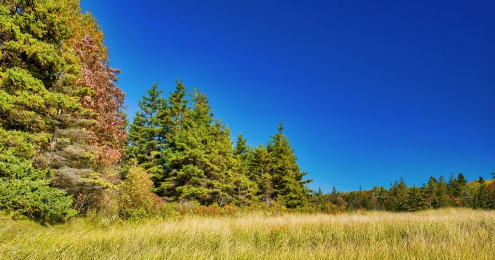 Beautiful forest of New England in foliage season USA