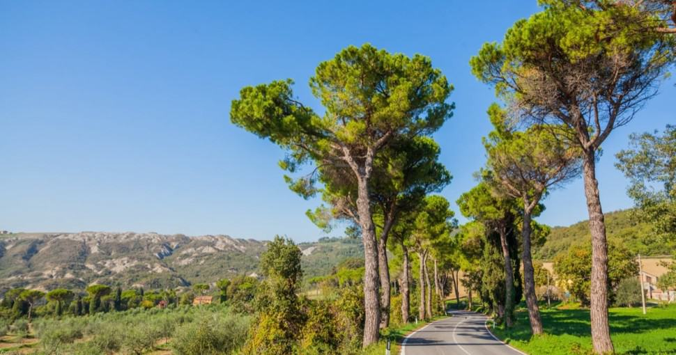 Beautiful road with pine trees Tuscany Italy