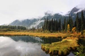 British Columbia lake and pine trees