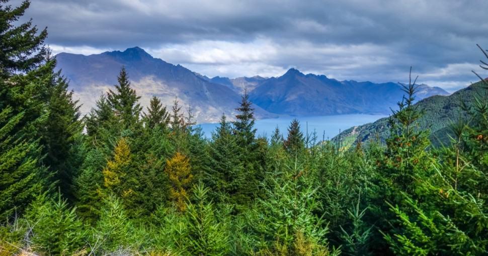 Lake Wakatipu and pine tree forest New Zealand