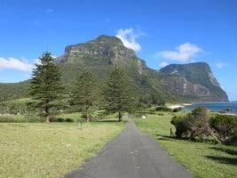 Norfolk Pine Trees on Lord Howe Island NSW Australia