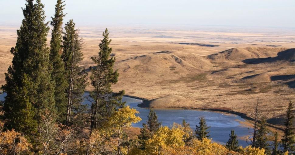 Reesor Lake Pine Trees Alberta