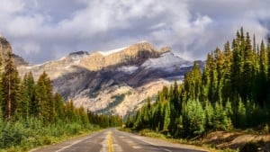 Scenic view of the road and pine trees on Icefields parkway Canadian Rockies Canada