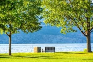 Two Oak trees at Okanagan Lake BC Canada