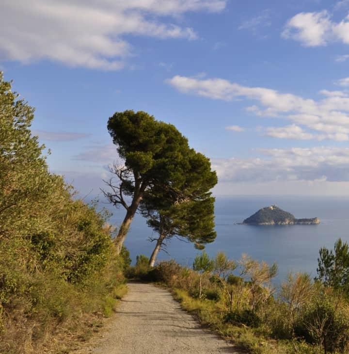 Maritime pine (pinus pinaster) Italy