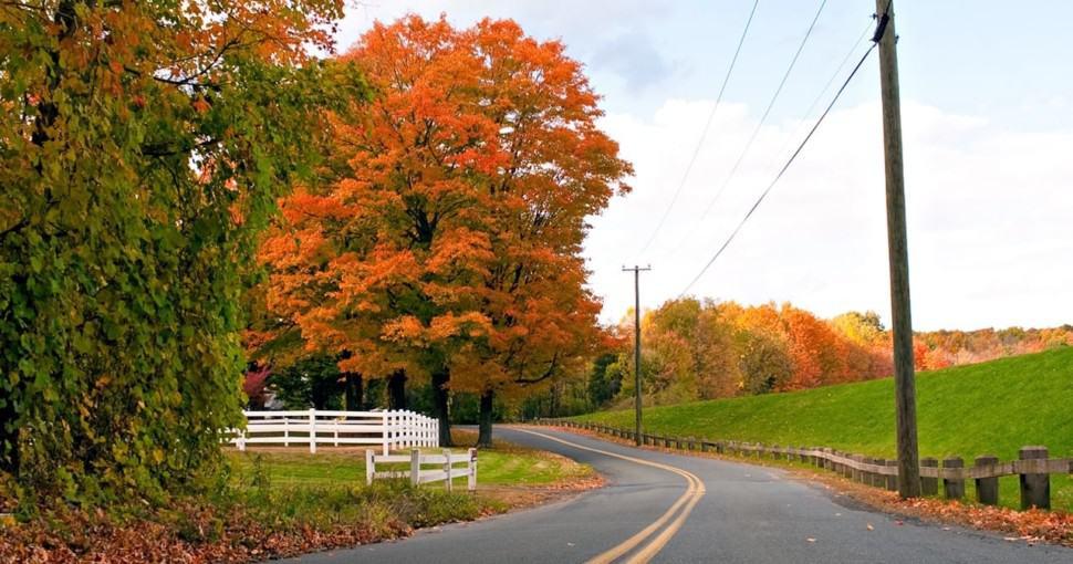 Autumn maple tree colors in Connecticut