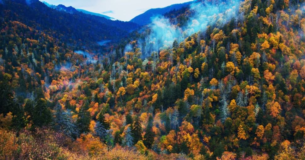 Colorful trees in the Smoky Mountains in Tennessee