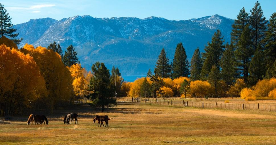 Trees in a field with a mountain range in the background Lake Tahoe California USA