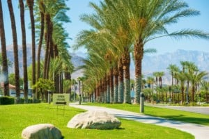 Trees lining Indian Wells City Streets California