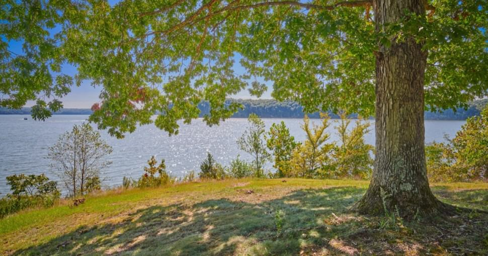 View of Kentucky Lake form under a large oak tree
