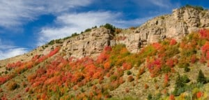 Autumn maples and cliffs Targhee National Forest Idaho