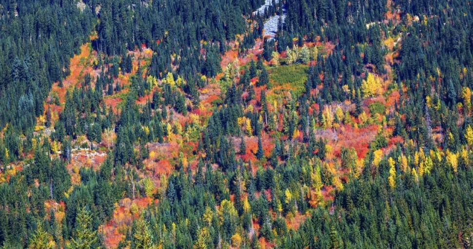 Fall Colors on the Mountain Side Stevens Pass Leavenworth Washington