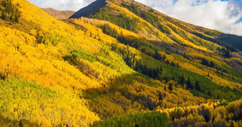 Fall Hills of Colorado covered in forest