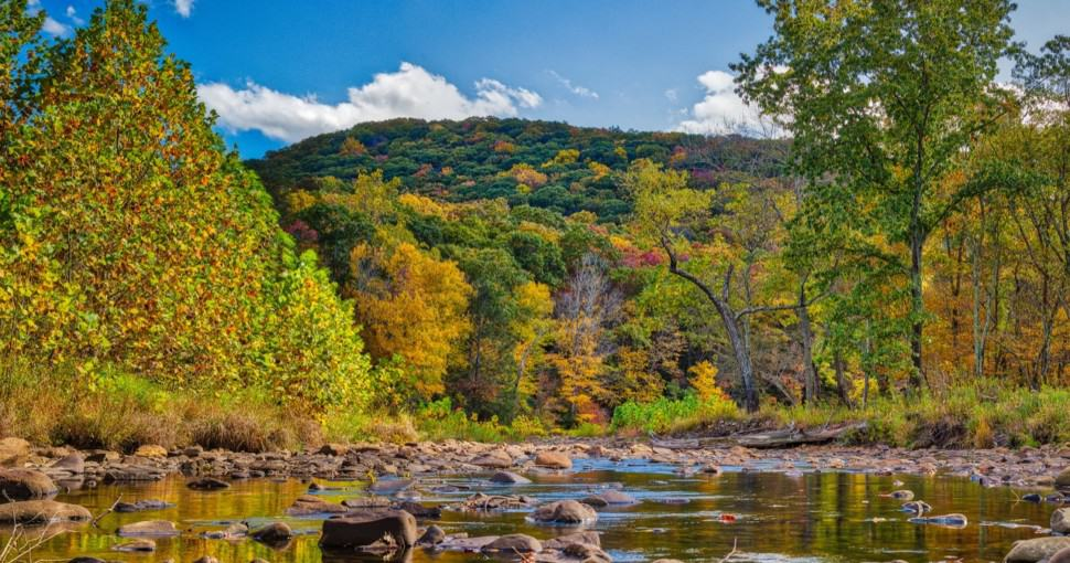Greenbrier River Foliage West Virginia