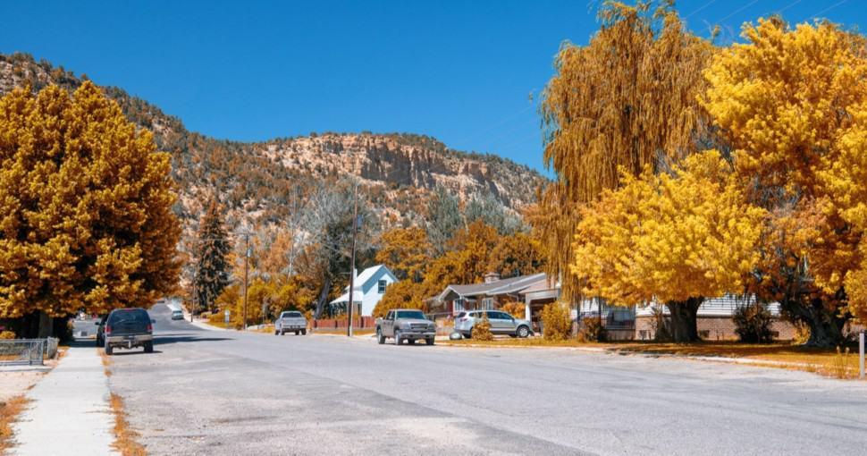 Maple trees near Glendale Utah in autumn.
