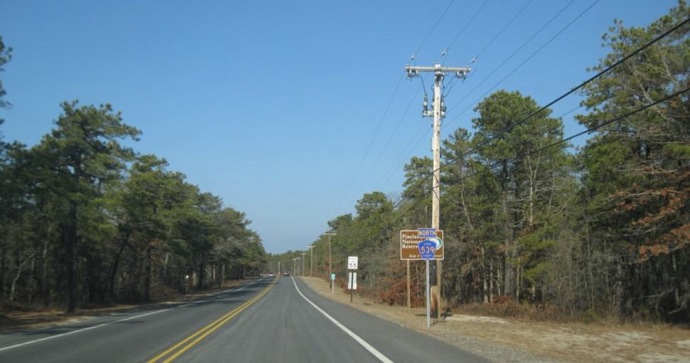 Pine trees along County Route 539 in New Jersey