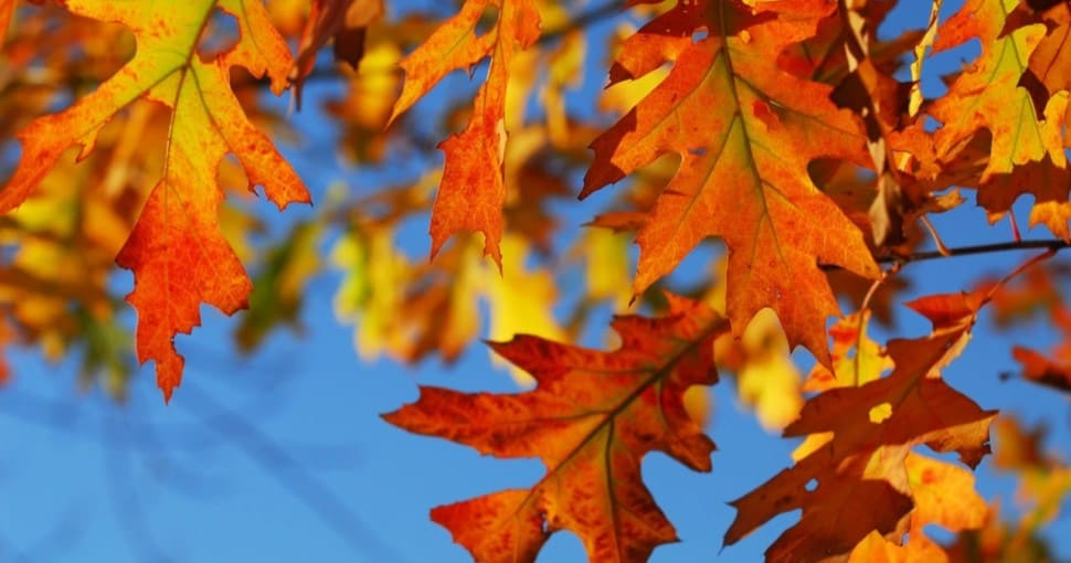 Common Types Of Oak Trees In New York State