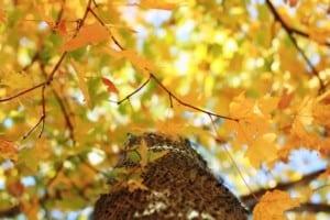 Most Common Types Of Maple Trees In Nova Scotia