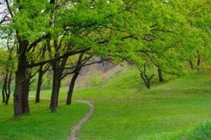 Oak trees in Nova Scotia