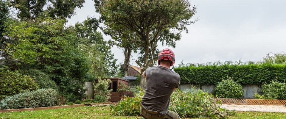 pulling-a-tree-whilst-felling